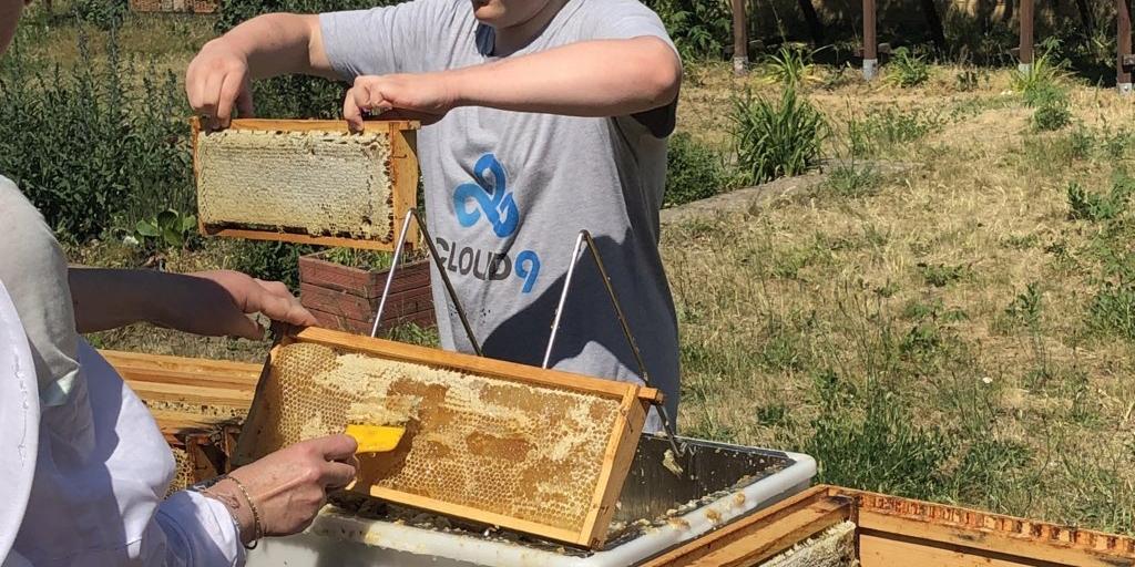 Velten läuft - Bienenprojekt